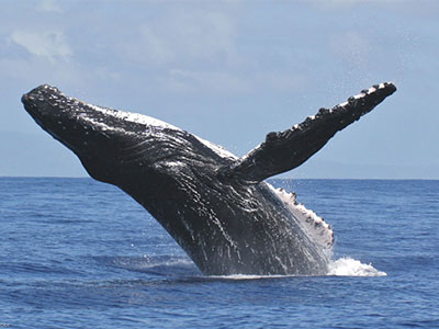 Whale Watch Experience Package